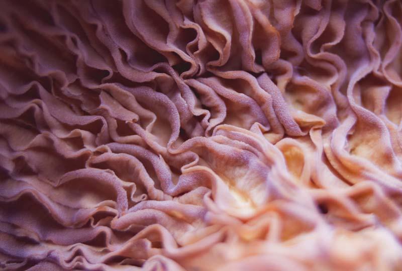 Medicinal mushrooms article
