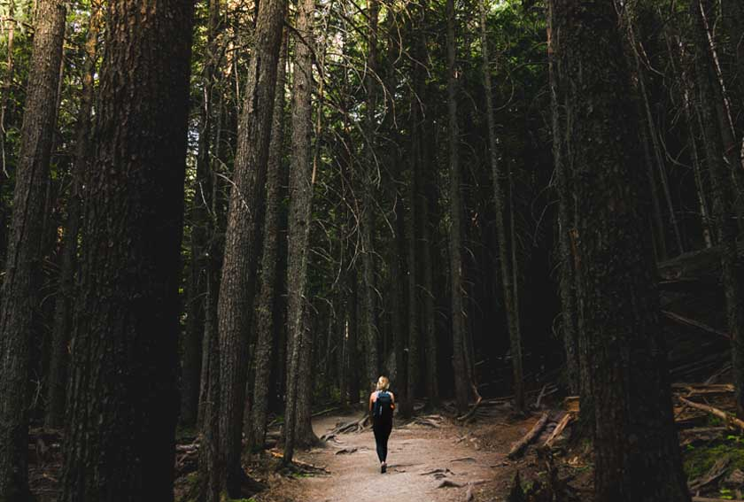 ON FOREST BATHING AND THE BENEFITS OF WANDERING
