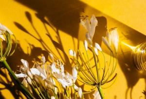 Abel Odor: fragrances as an Art Form we overlook (or oversmell)